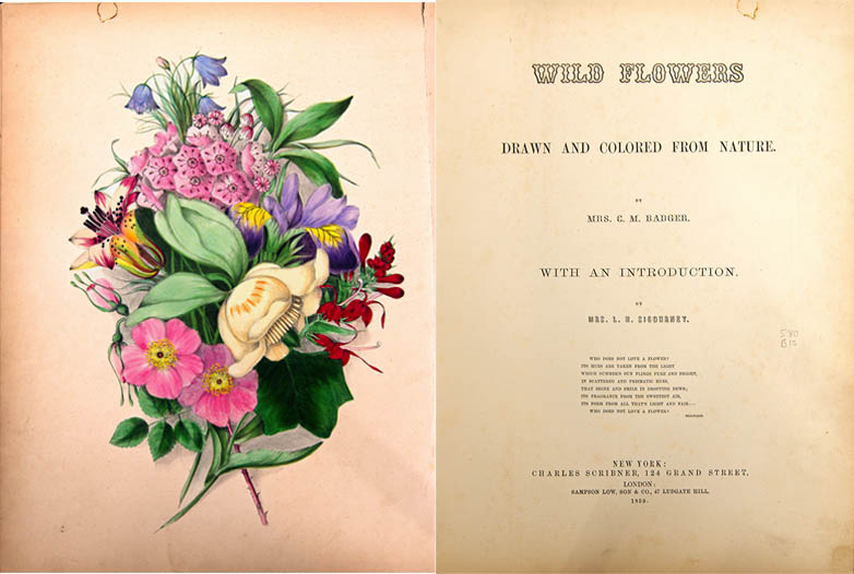 Title page of Wild Flowers Drawn and Colored from Nature by C. M. Badger published by Charles Scribner & Co. 1859