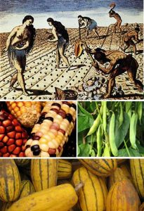 Native American farming and traditional crops - maize, beans, and squash